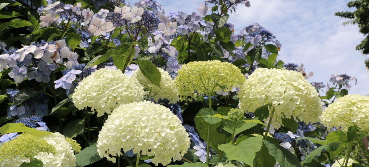 伊東市伊豆高原で花の名所と言えばフラワーガーデンがおすすめ