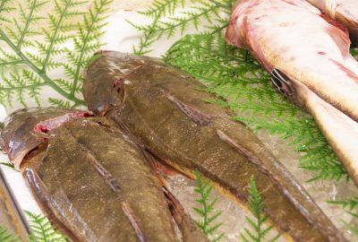 伊東市伊豆高原の夏の海鮮グルメは照りゴチがおすすめ!