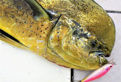 伊東市伊豆高原の夏の海鮮グルメのシイラってご存知ですか?